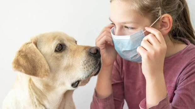 Собаки могут распознавать COVID-19 по запаху с точностью до 96%, считают ученые