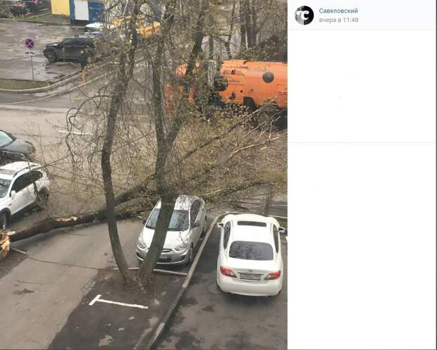 На Мишина удачно упало дерево