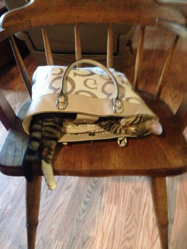 Чего только не найдешь в женской сумочке. | Фото: Tumblr.