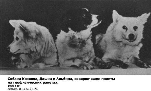 """Все 48 """"космических"""" собак из СССР"""