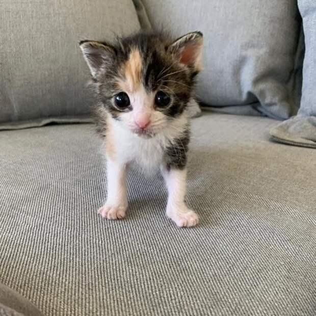 Её нашли под крыльцом в пригороде Лос-Анджелеса — крохотного новорожденного котенка, со следами пуповины и без матери-кошки