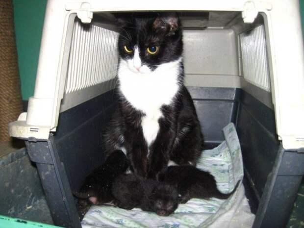 Люди хотели выкинуть коробку с кошкой и ее малышами