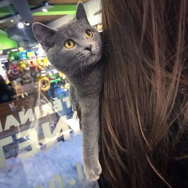 Котенок и девушка