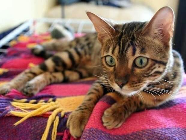Интересные факты, из жизни кошек