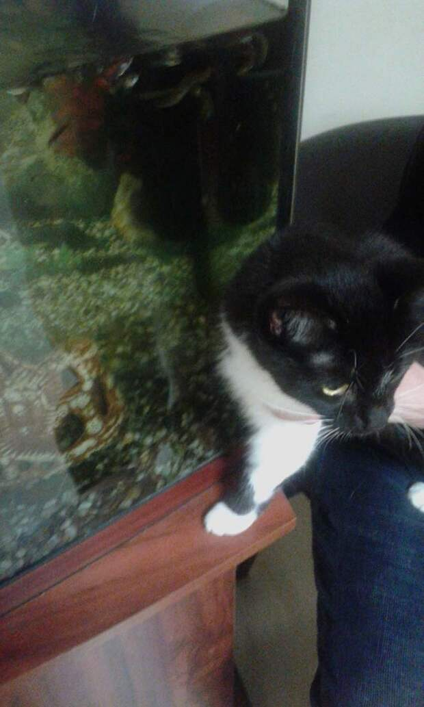«Теперь я люблю мачеху, а не тебя!» Хозяин решил пристрелить кошку из-за нового романа
