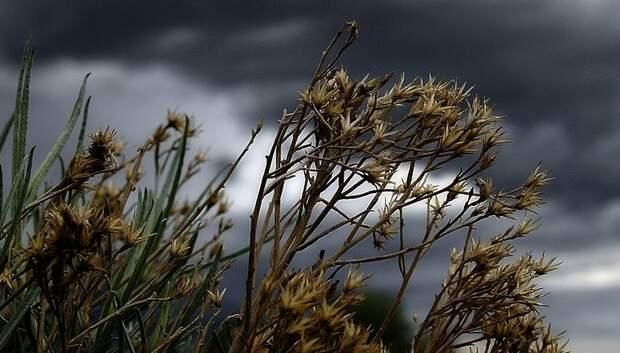 Жителей Подмосковья предупредили о грозе и граде