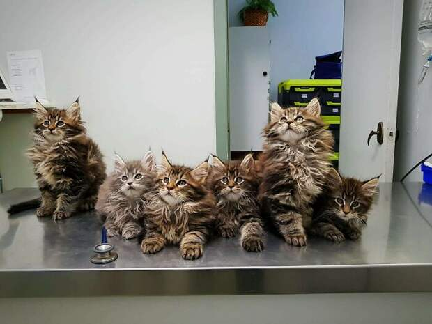 На приём к ветеринару... фото
