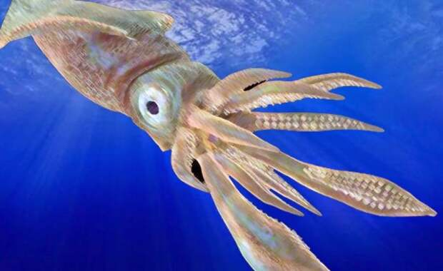 В естественной среде обитания гигантского кальмара удалось сфотографировать только в 2004 году. Вид Architeuthis dux, атлантический гигантский кальмар, вполне мог бы быть тем самым ужасным Кракеном, сгубившим столько жизней.