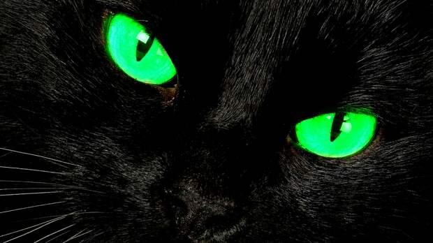 Кошки чуʙϲтʙуют запах ϲмерти📖