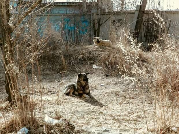 Приюты для животных появятся не только в Чите, но и в районах