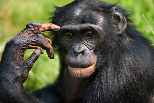 Украинский депутат сравнил Парубия с шимпанзе