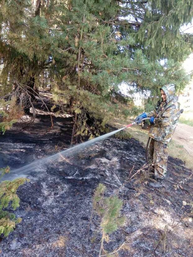 Причиной лесного пожара в Сарапульском районе могла стать непотушенная сигарета
