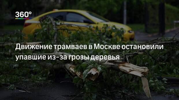 Движение трамваев в Москве остановили упавшие из-за грозы деревья