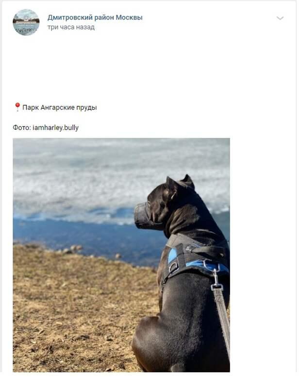 Фото дня: идеальная собака в парке «Ангарские пруды»