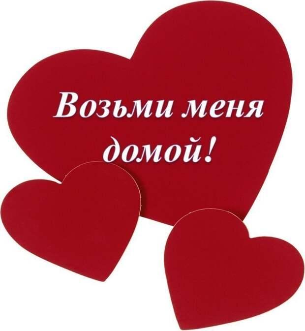 Возьмите домой счастье!!!