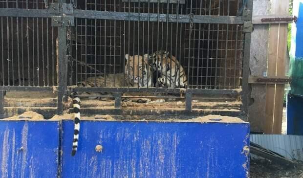 Вмире животных. ВУфе «кошачий» зоопарк «Саванна» живет наптичьих правах