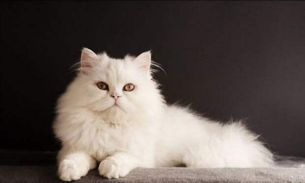 http://kot-pes.com/wp-content/uploads/2015/06/White_cat_06-650x389.jpg