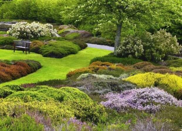 В сухую и жаркую погоду растения будут весьма благоприятно реагировать на дополнительный полив и опрыскивание