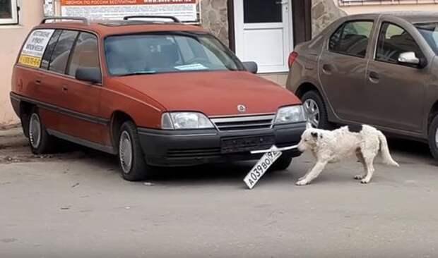 В Ялте орудует бродячий похититель автомобильных номеров