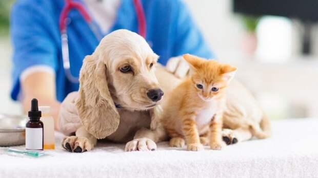 Специалисты ГБУ РК «Евпаторийский городской ВЛПЦ» проведут выездную вакцинацию домашних собак и кошек против бешенства на территории городского округа Евпатория в мае 2021 года