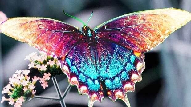 У некоторых видов бабочек нос расположен в лапках вопросы, животные, земля, мир, планета, почему, факты