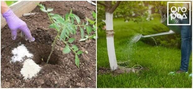 Применение сульфата магния в саду и огороде