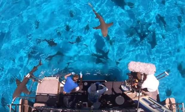 Что будет если пролить кровь рядом с акулой