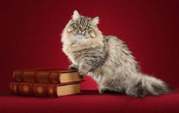 Всегда котенок – 5 самых миниатюрных пород кошек
