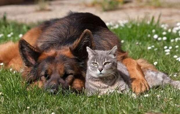 http://aif.md/wp-content/uploads/2014/11/1351455516_cat-and-dog-02.jpg