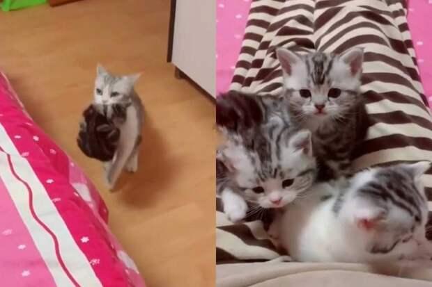 «Нянчись ты»: мама-кошка решила отдохнуть откотят ипринесла иххозяйке