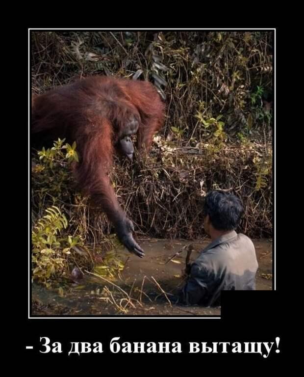 Демотиватор про обезьяну