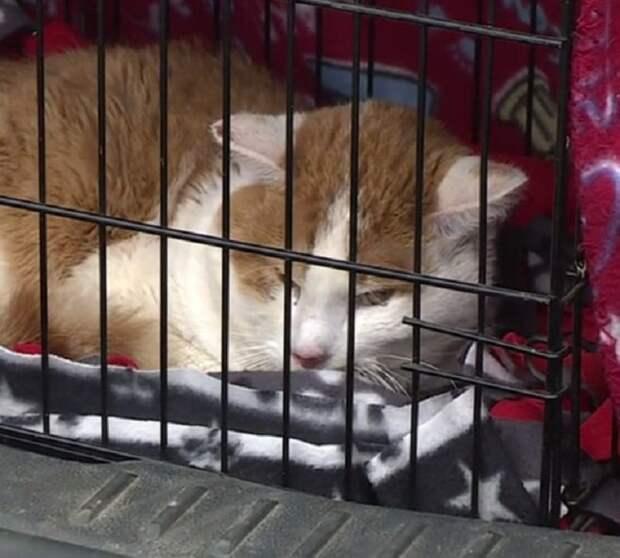 Кот в клетке