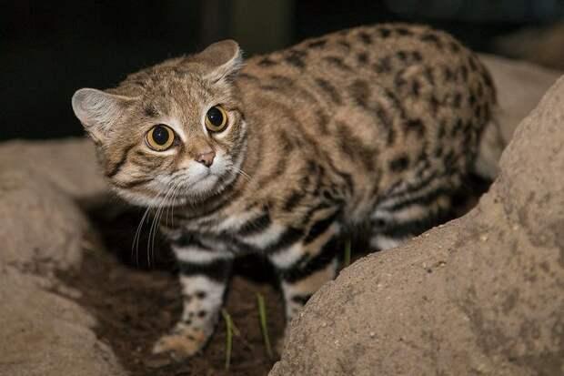 15 невиданных животных, которые сделали бы учебники по биологии в 1 000 раз увлекательнее
