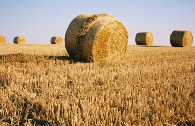Урожай в пандемию: что ждет мировой рынок продовольствия?