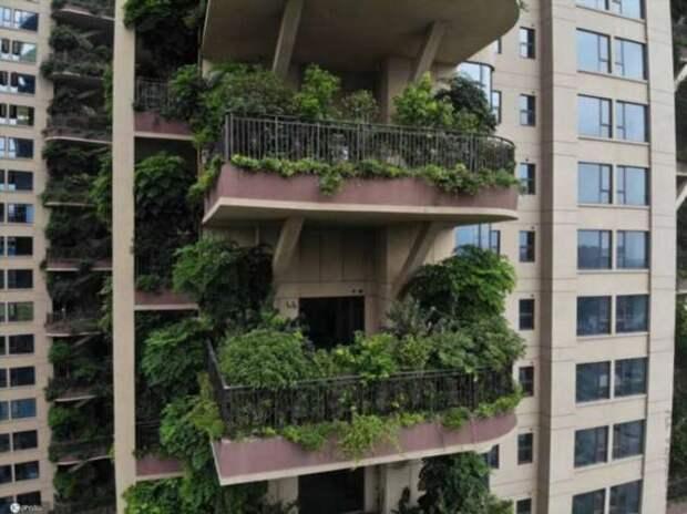 «Вертикальный лес» в китайском жилом комплексе превратился в кишащие комарами джунгли