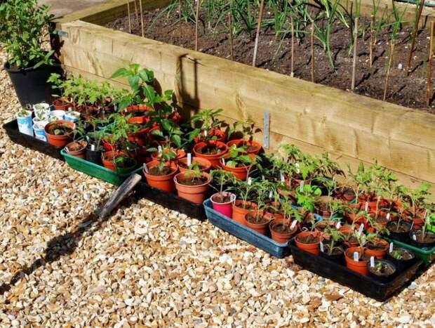 Что не забыть сделать в апреле садоводу?
