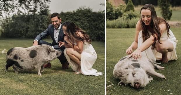 Свинья стала подружкой невесты и разнообразила день свадьбы