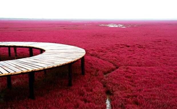 Красный пляж Панцзинь — уникальная достопримечательность Китая