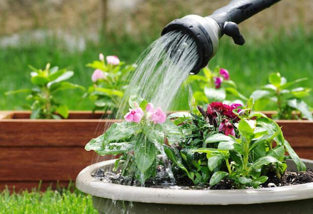 Какой водой вы поливаете растения?