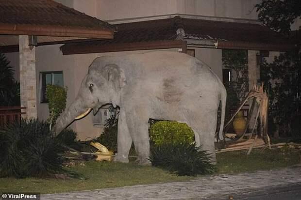 Отважный кот прогнал слона-хулигана