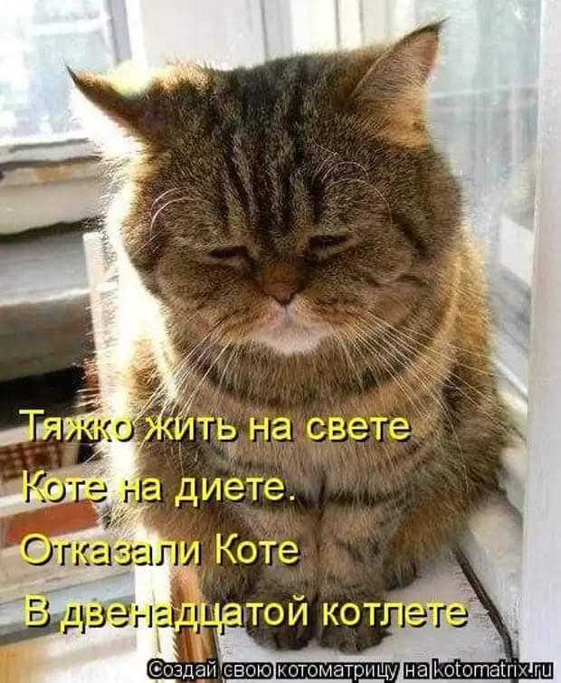 Возможно, это изображение (кот и текст «тяжко жить на свете коте на диете. отказали коте в двенадцатой котлете создай свою котоматрицу Ha»)