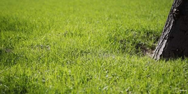 Газон в парке Дружбы скашивают при высоте больше пятнадцати сантиметров