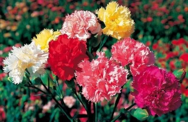 9 цветов, которые высевают в последний месяц зимы