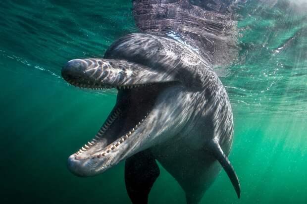 С такого ракурса дельфины уже не кажутся такими милыми...
