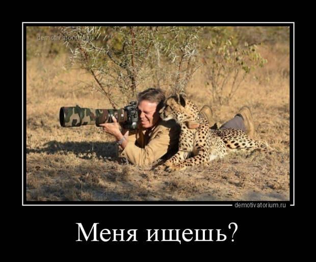 5402287_demotivatorium_ru_menja_ishesh_71799 (600x498, 137Kb)