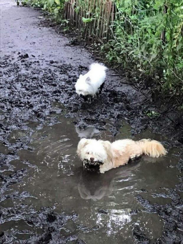 Белая собака выглядит очень эффектно в луже грязи. | Фото: MADE IN CCCP.