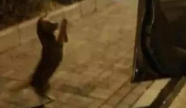 Женщина покормила бродячего пса и не поверила своим глазам, когда тот заплакал