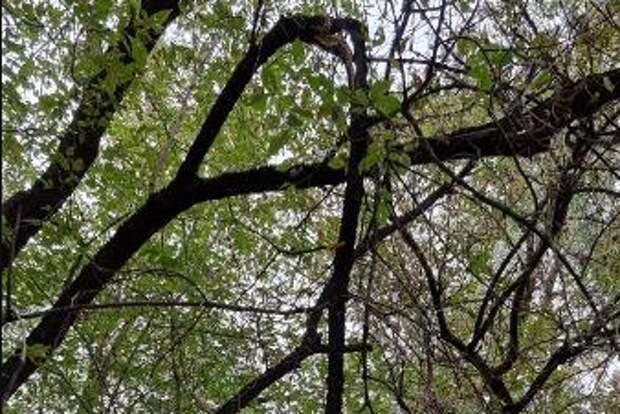 На Ферганской опасно свисающую ветвь удалили — Жилищник