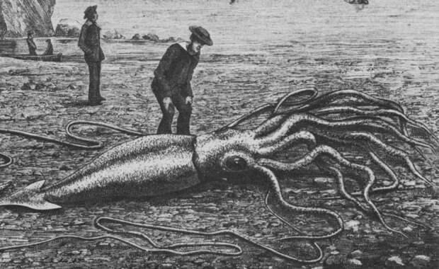 Гигантский кальмар: хищник, которого боялись моряки (8 фото)