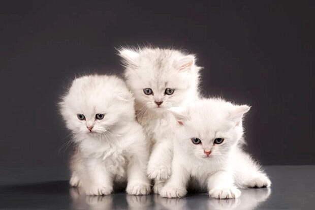 Пять китайских символов удачи: Летучая мышь, кошка и паук — это на счастье!